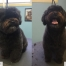 Dog-Grooming-Manhattan-Beach-Hermosa-Redondo-Bob